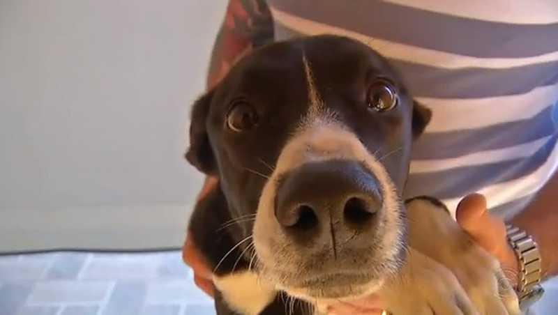 Araraquara (SP) aprova em 2º turno lei que impede adoção de cães e gatos por pessoas autuadas por maus-tratos