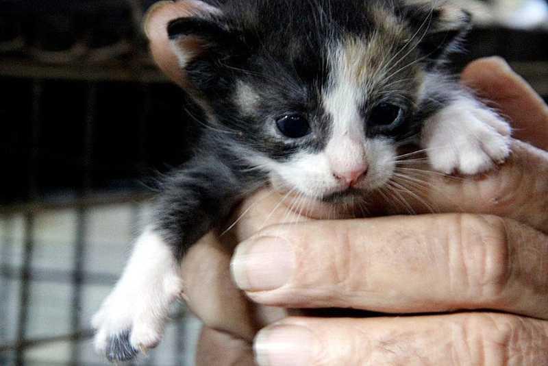 Ação em Araraquara (SP) arrecada ração para animais de estimação