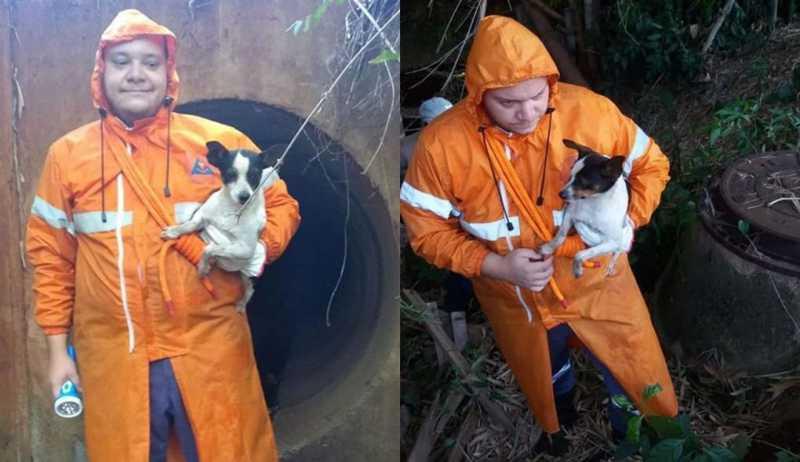 Defesa Civil salva cachorro preso em galeria de águas pluviais em Bocaina, SP
