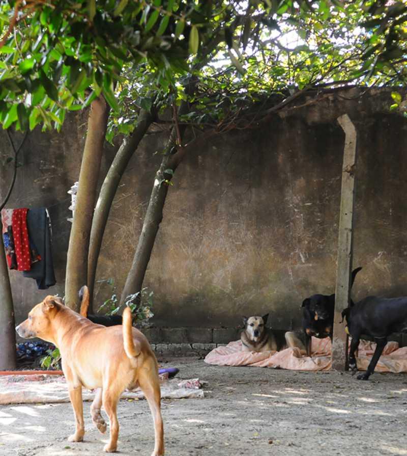 ONG que trabalha na proteção animal pede ajuda. Diz que a arrecadação de ração caiu cerca de 60% desde o início da quarentena. Foto: Wagner Souza/AAN.