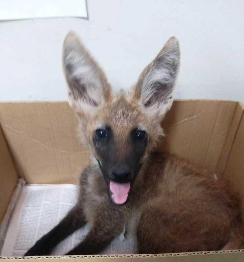 Joca tinha apenas quatro meses de vida quando foi resgatado pela Polícia Ambiental — Foto: Arquivo Pessoal/Zoológico de Catanduva