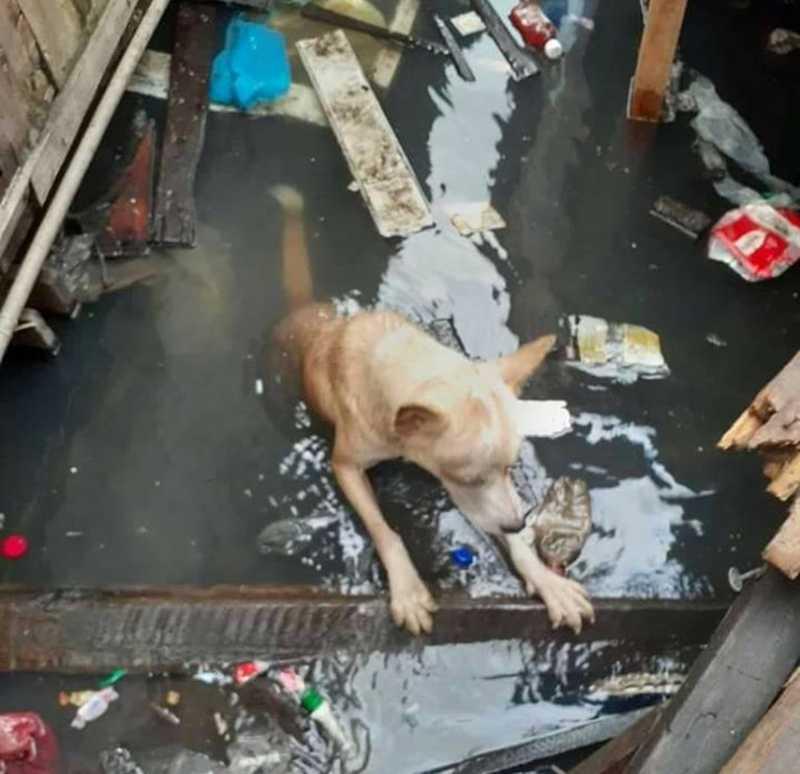 Cão emociona ao fugir de novo tutor para voltar a morar em casa demolida