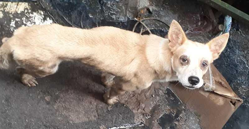 Animal está há cinco meses aguardando onde era a antiga casa, em Cubatão (SP). — Foto: Arquivo Pessoal