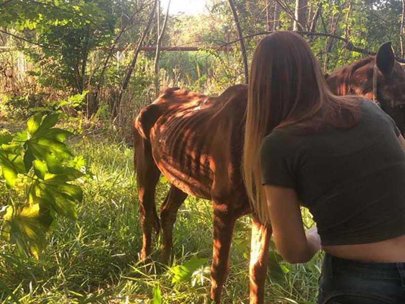Cavalos são resgatados de maus-tratos no Colibris, em Indaiatuba, SP