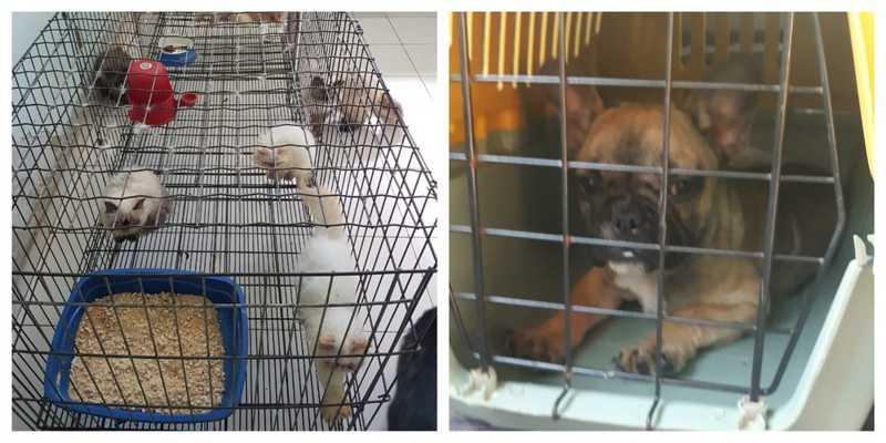 Segundo a Polícia Civil, alguns animais estavam com sinais de maus-tratos no canil em Itariri — Foto: Divulgação/Polícia Civil