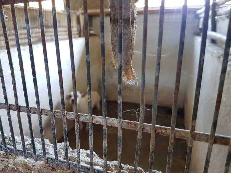 Polícia Civil localizou canil irregular após denúncia anônima em Itariri — Foto: Divulgação/Polícia Civil