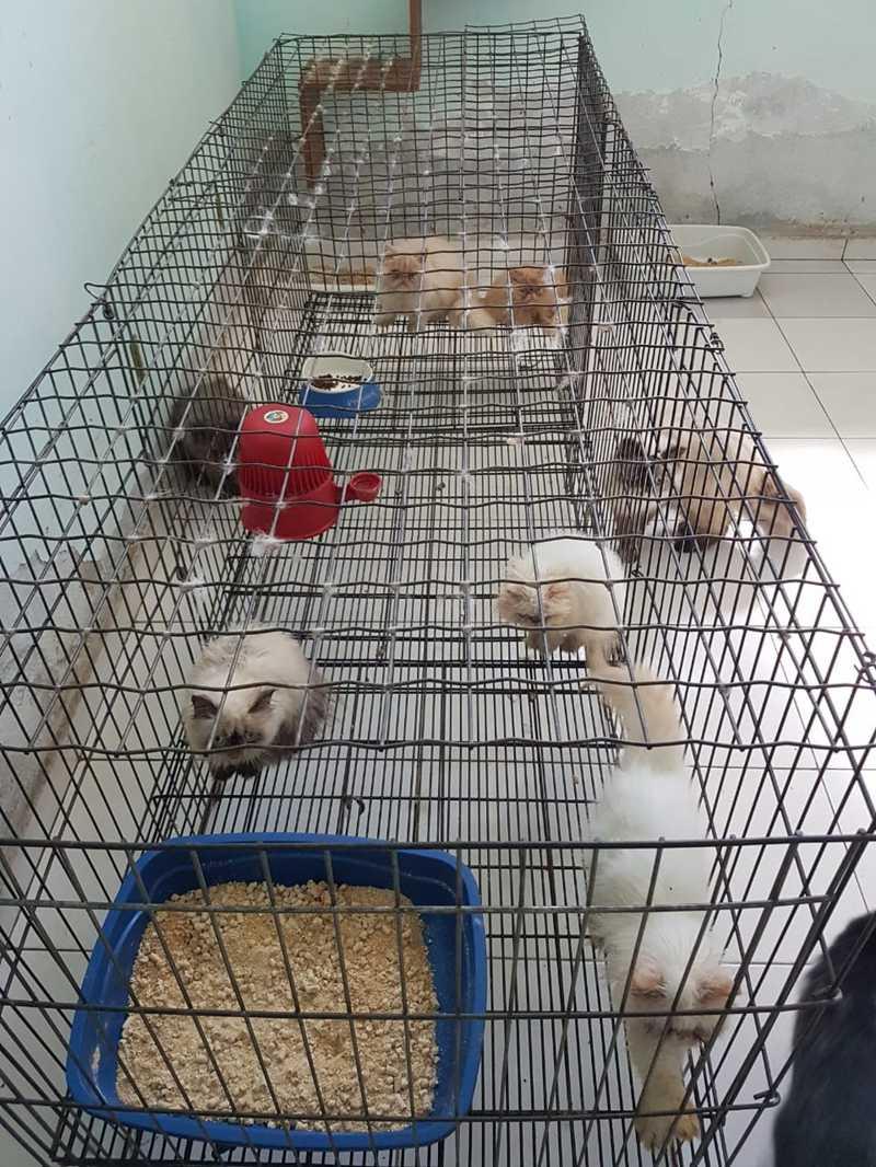 Gatos foram localizados em condições de maus-tratos em Itariri, SP — Foto: Divulgação/Polícia Civil