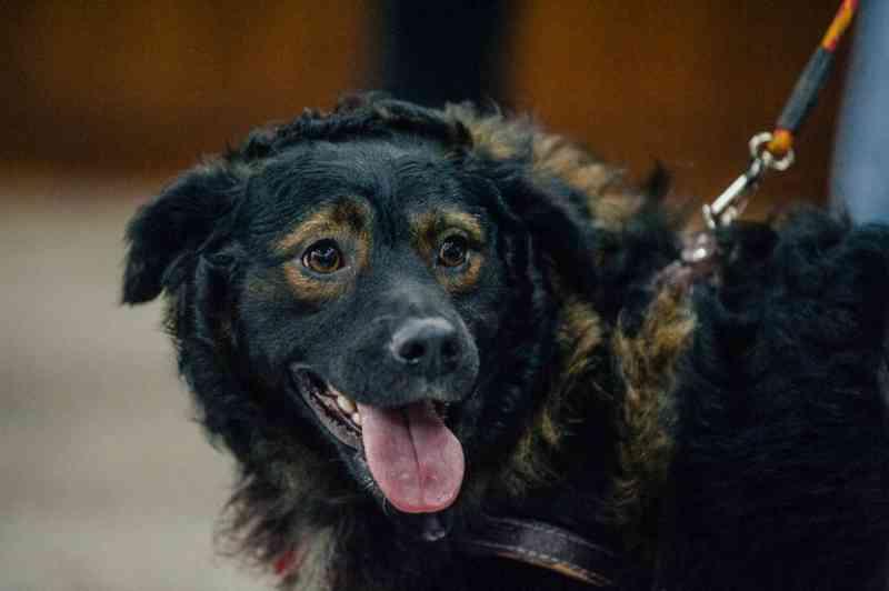 Prefeitura de São Paulo facilita adoção de cães e gatos durante quarentena