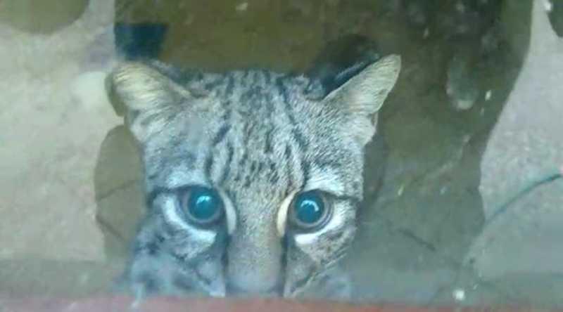 Animais silvestres estavam em cativeiro — Foto: Divulgação/Polícia Militar Ambiental
