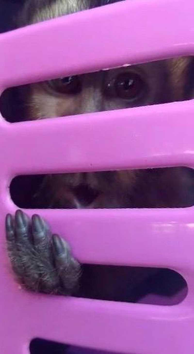 Homem é preso por maus-tratos a animais em São José dos Campos, SP