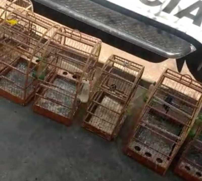 Polícia resgata 14 pássaros e multa homem em R$ 11,5 mil em Severínia, SP