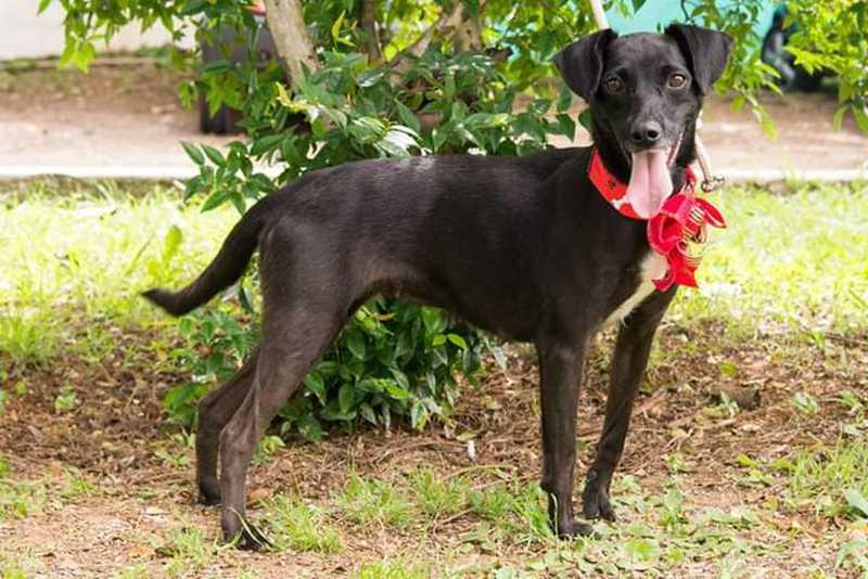 Cães do Abrigo Municipal estão para adoção em Sorocaba (SP) — Foto: Divulgação/Prefeitura de Sorocaba