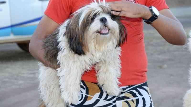 Moradores de Palmas (TO) poderão agendar castração gratuita de cães e gatos; veja como