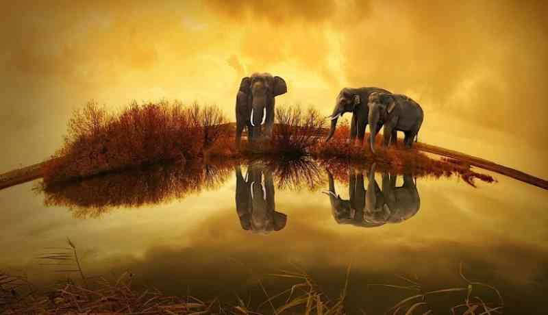 Elefantes 'desempregados' da Tailândia regressam ao seu habitat