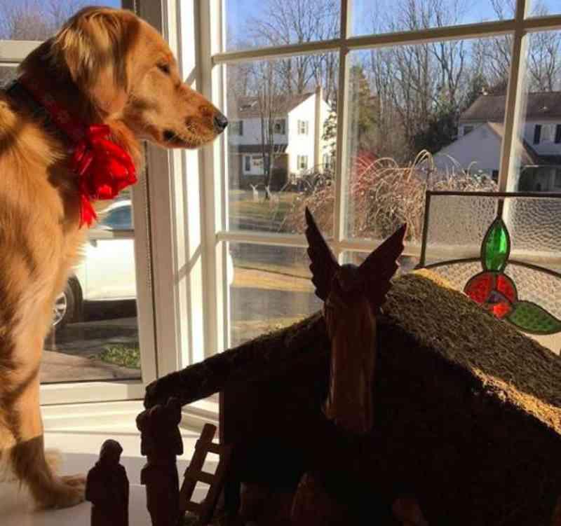 Cachorra amável espera todos os dias pela visita do carteiro