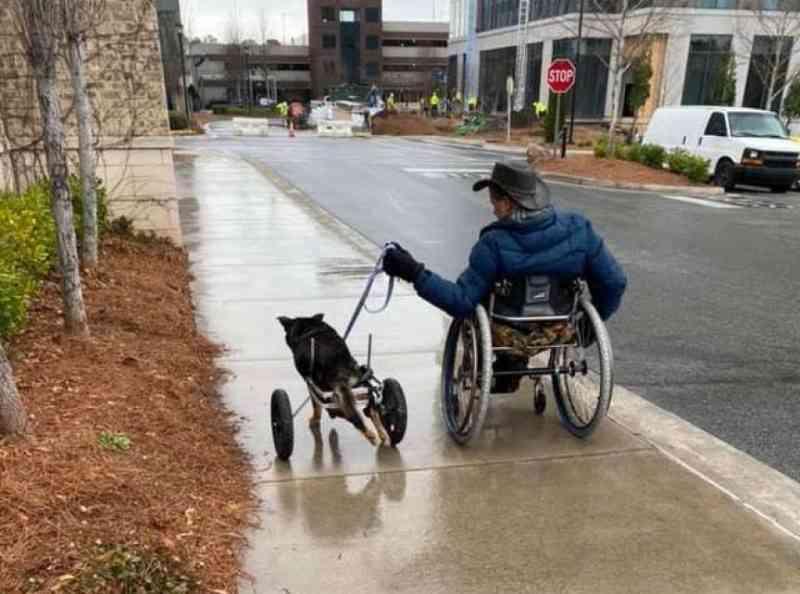 Cachorro em cadeira de rodas, devolvido 4 vezes ao abrigo é adotado por um homem com a mesma condição