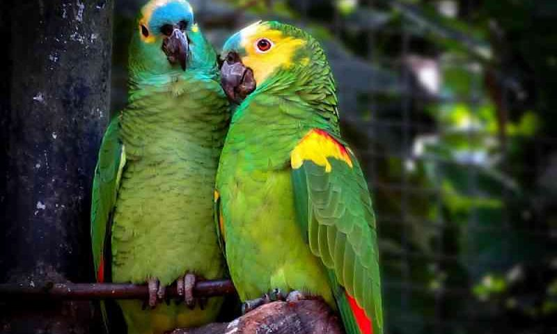 Ibama expede orientação geral em desfavor da fauna e do meio ambiente