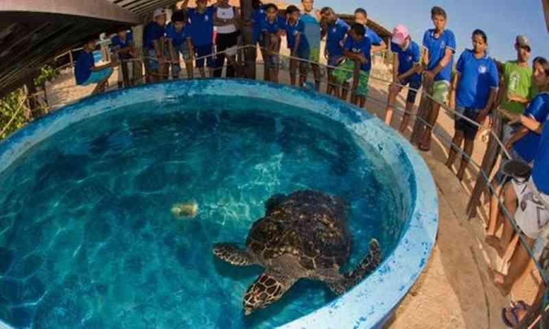 Ministro Ricardo Salles extingue três bases do Projeto Tamar, de proteção às tartarugas