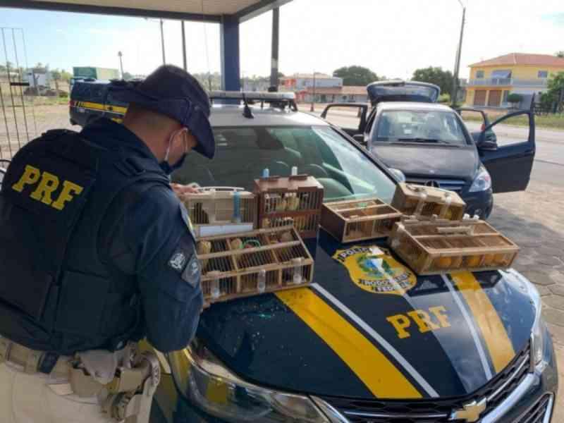 Homem é preso suspeito de transportar 16 aves irregularmente dentro de carro em Alagoas