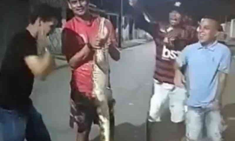 Polícia autua seis pessoas após vídeo onde filhote de jacaré é maltratado