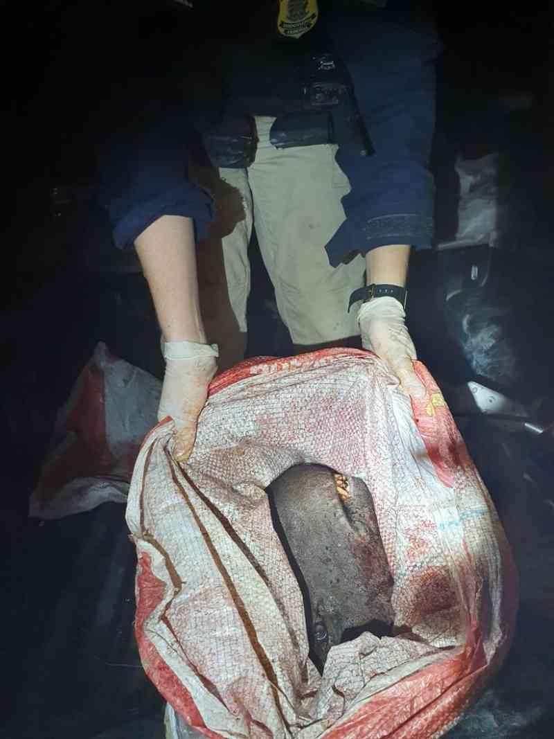 Grupo é preso com carne de animais silvestres e cabeça de anta na BR-174