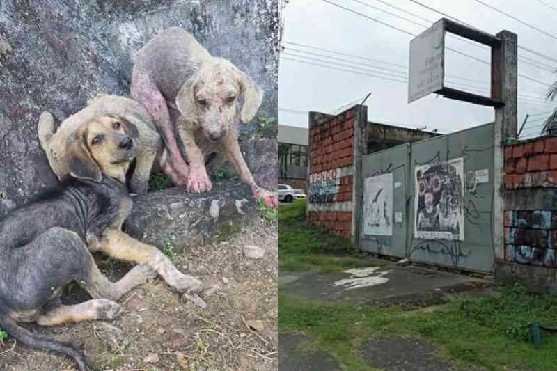 Ativistas denunciam maus-tratos contra cães em terreno da Amazonas Energia; veja vídeo