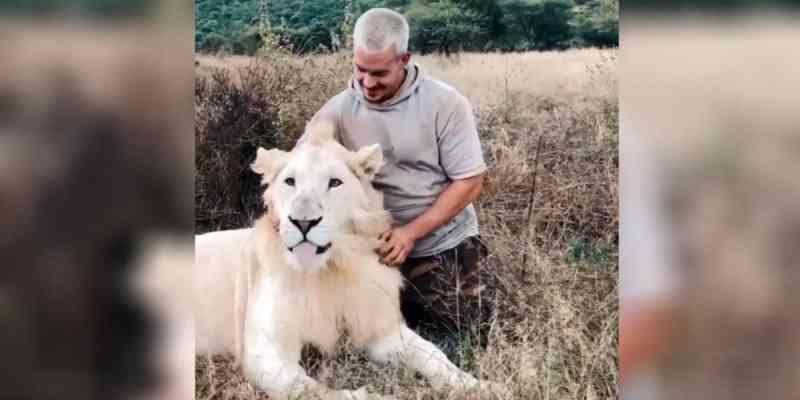 Vídeo mostra amizade entre leão e homem na África do Sul