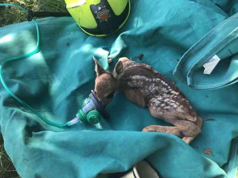 Bombeiros salvam bebê cervo com sua própria máscara pequenina de oxigênio