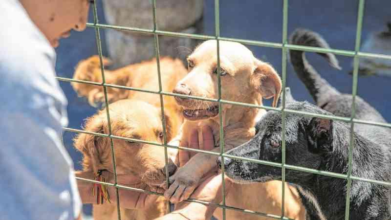 Distribuição de alimentos a animais de rua na pandemia é citada em projeto da Câmara de Fortaleza, CE
