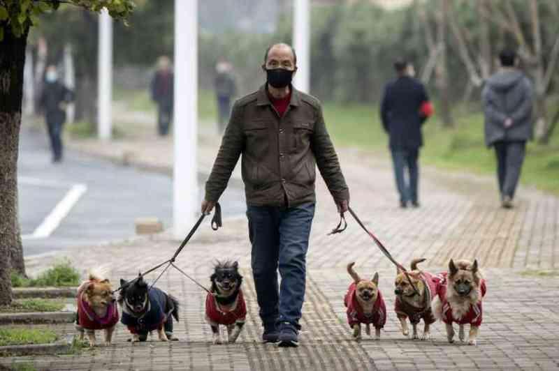 China proíbe criação de cães e gatos para consumo humano: 'são companheiros'