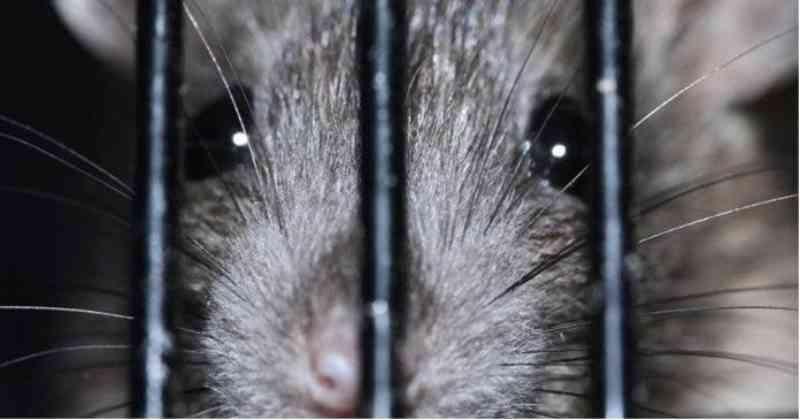 Decisão histórica: Colômbia proíbe testes de cosméticos em animais