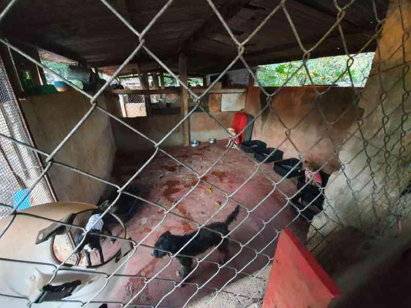 Presos! Falsos protetores de animais resgatava animais para lucrar com doações financeiras