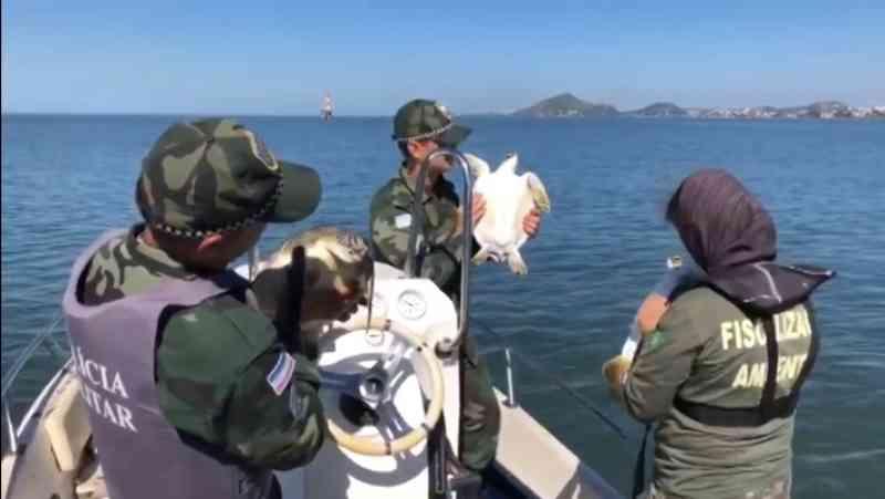 Tartarugas que foram presas em redes de pesca são devolvidas ao mar em Vitória, ES