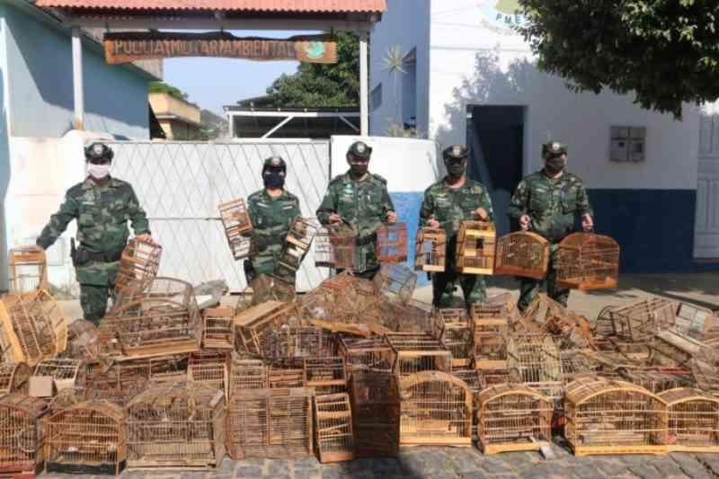 Mais de 500 gaiolas são destruídas pela Polícia Militar Ambiental no sul do ES