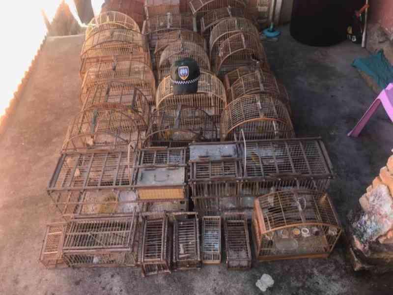 Polícia Ambiental recupera 450 pássaros mantidos em cativeiro irregular no Sul do ES