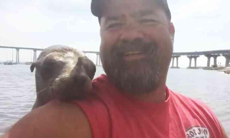 Canoísta é surpreendido quando um adorável leão-marinho bebê sobe a bordo e o abraça enquanto ele tira selfies e filma a cena