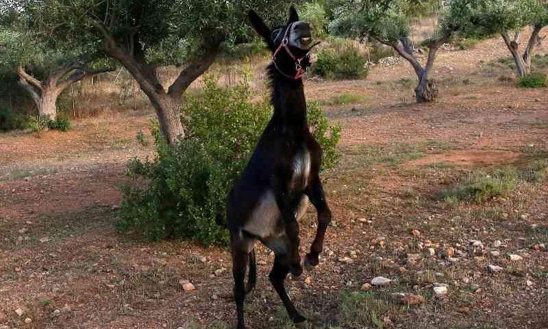Este santuário para burros quer sensibilizar os gregos