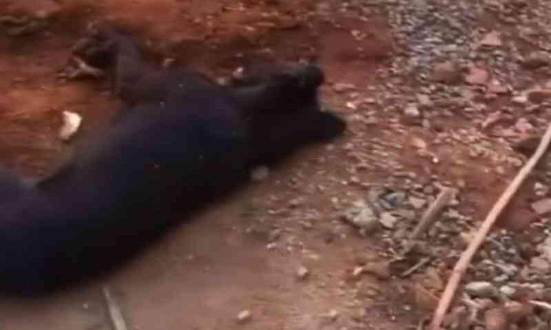 Cachorro é morto com dois tiros na testa em Anápolis, GO