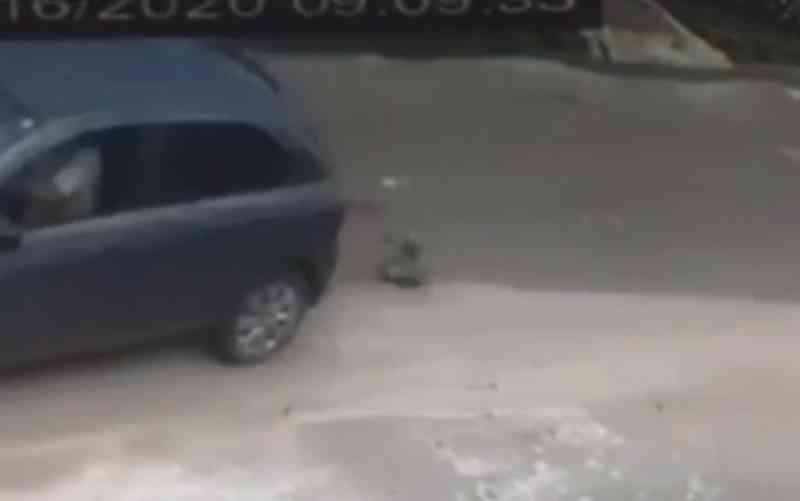 Moradores denunciam que cachorros de rua estão sendo brutalmente assassinados em Anápolis, GO; vídeo