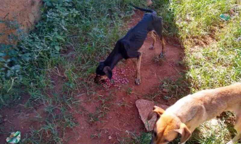 Cães vítimas de maus-tratos são resgatados em casa de Aparecida de Goiânia, GO