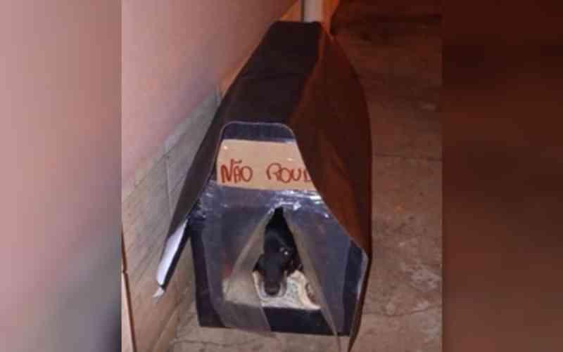 Engenheira constrói mais de 70 casinhas para abrigar cachorros de rua em Morrinhos, GO
