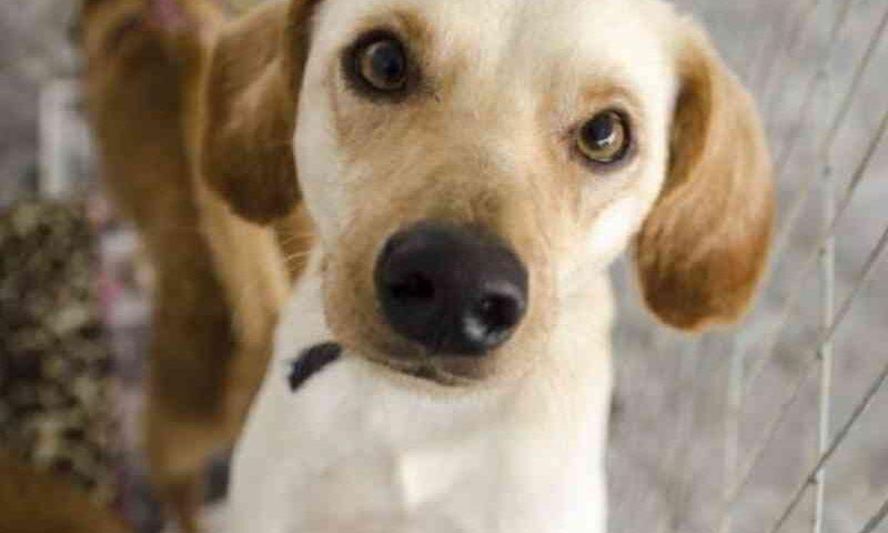 Empresas podem perder licenças por violência contra animais em Goiás