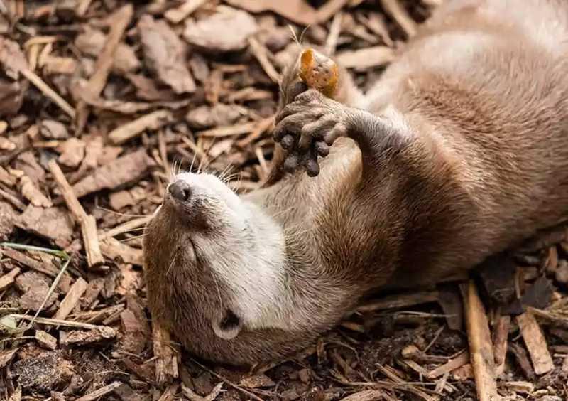 Animais que poderiam ser sacrificados por zoo encontram novos lares