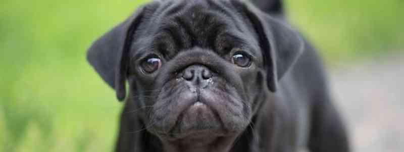 Homem que espancou o cão até à morte condenado a um mês de pena suspensa