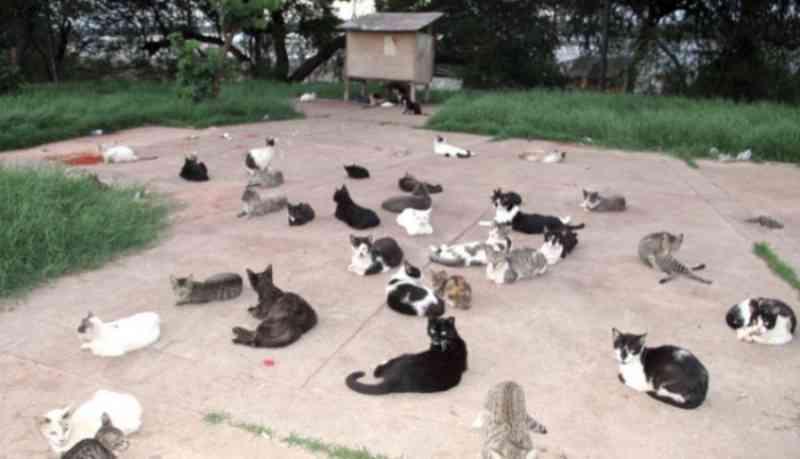 Justiça: município de São Luís (MA) deve resgatar e buscar abrigo para animais da Praça dos Gatos