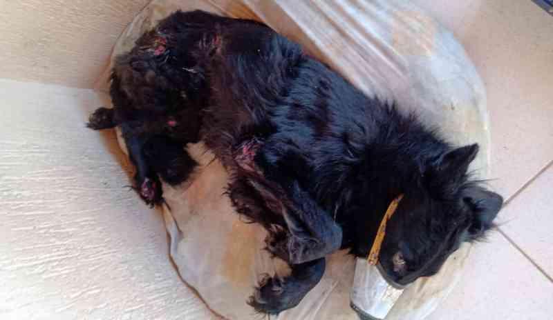 Cão com sinais de maus-tratos é recolhido pela PM do Meio Ambiente em Alfenas, MG