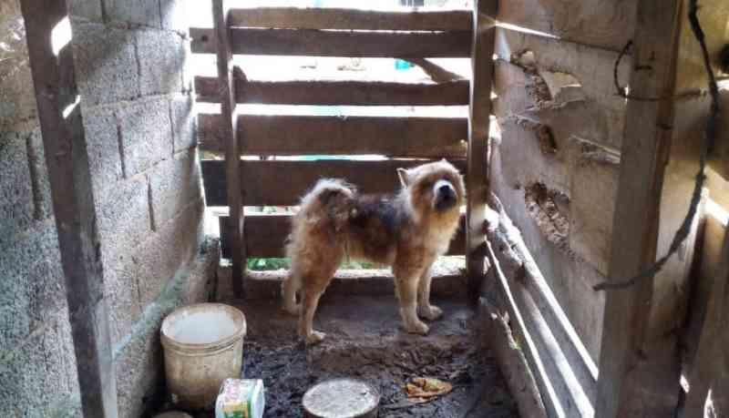 Cadela resgatada em condições de maus-tratos em Barbacena, MG