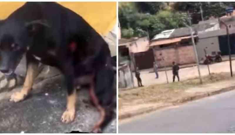 PM atira em cachorro durante ação em Contagem (MG) e vídeo gera revolta: 'Muita crueldade'
