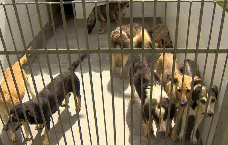 Canil Municipal de Juiz de Fora (MG) arrecada doações para 600 animais abandonados