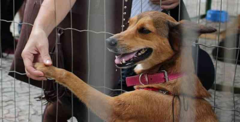 Canil Municipal registra aumento de casos de abandono de animais em Juiz de Fora (MG) por conta da pandemia